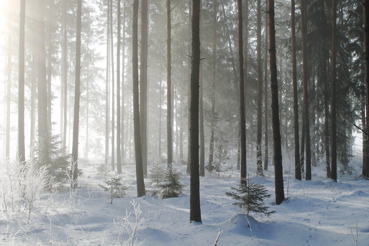 Metsäkin saa joulurauhan