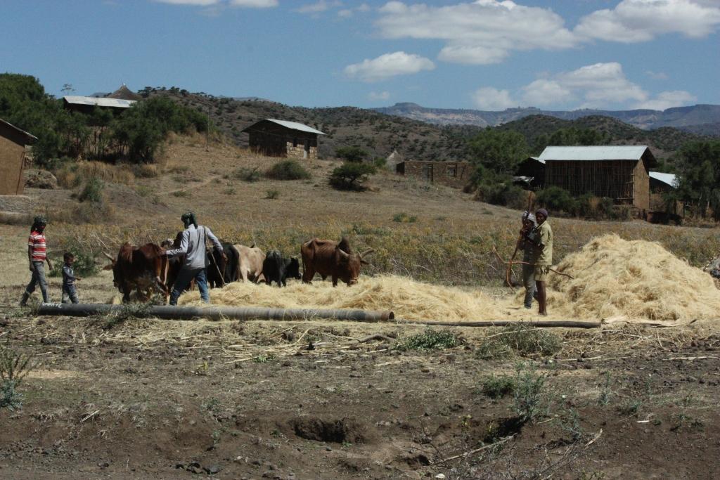 """Etiopian tuomisia 2: """"Lintu lentää kahdella siivellä"""""""