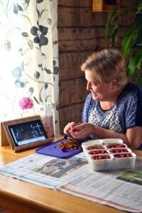 Marjaana Kotilainen perkaa mansikoita samalla kun seuraa Kansanlähetyspäivien ohjelmaa verkossa.